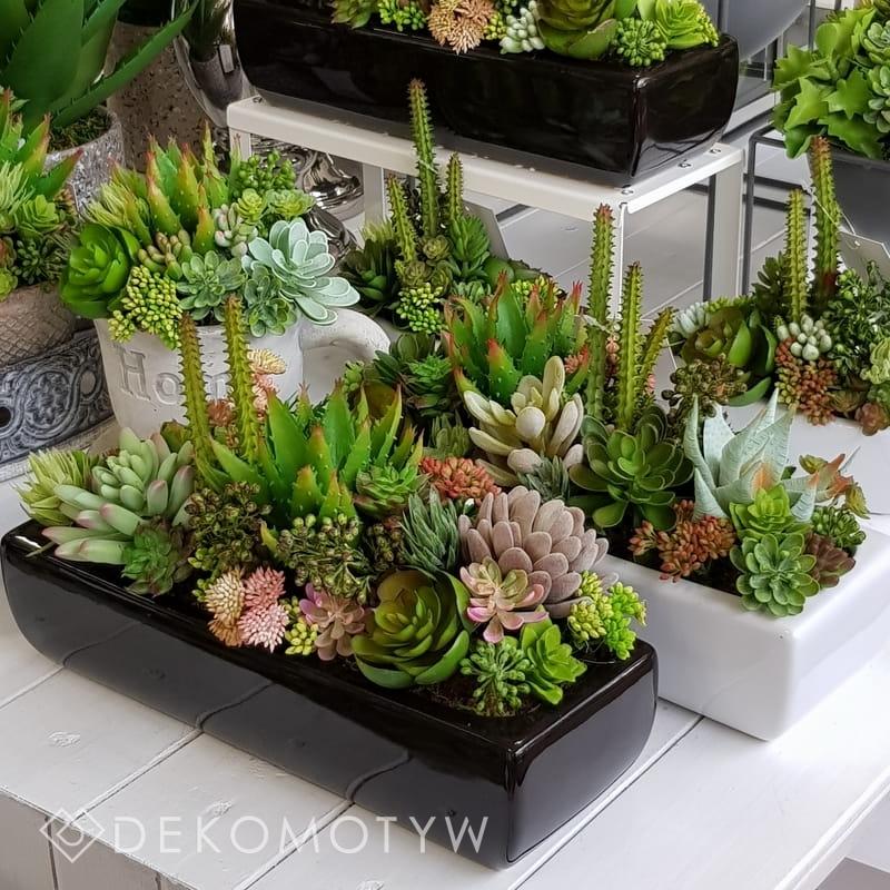 Sukulenty Kaktusy Donica Podłużna Dolce I Biała