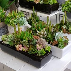 Sukulenty Kaktusy Donica Podłużna Dolce I Biała 8512