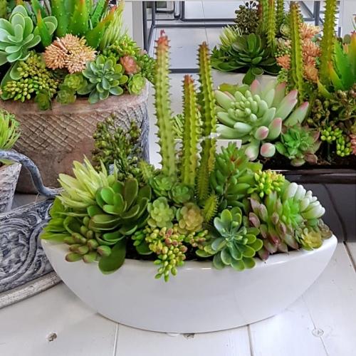 Sukulenty Kaktusy Donica łódka Neva