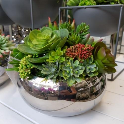 Sukulenty Kaktusy Donica Misa Silver